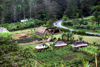 Typical Highland Village in Papua New guinea